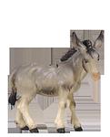 1 Esel