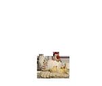 Orient-Krippe: Henne mit Küken