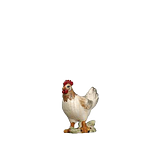 Orient-Krippe: Henne