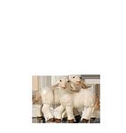 Orient-Krippe: Lammgruppe