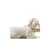 Orient-Krippe: Schaf