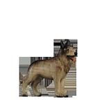 Orient-Krippe: Hund Schäferhund