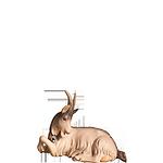Fill-Krippe: Ziege