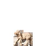 Fill-Krippe: Schaf halbwüchsig