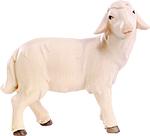 Schaf (lasiert)