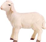 Schaf(lasiert)